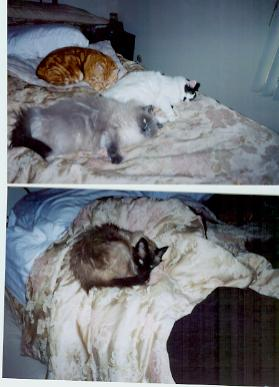George, Toulouse, Cookie, Sam