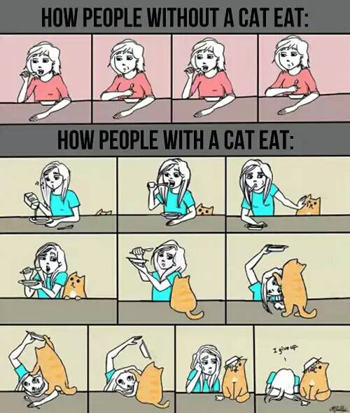 how people with cats eat